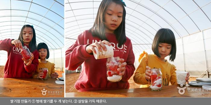 딸기청 만들기 ① 병에 딸기를 두 개 넣는다. ② 설탕을 가득 채운다.