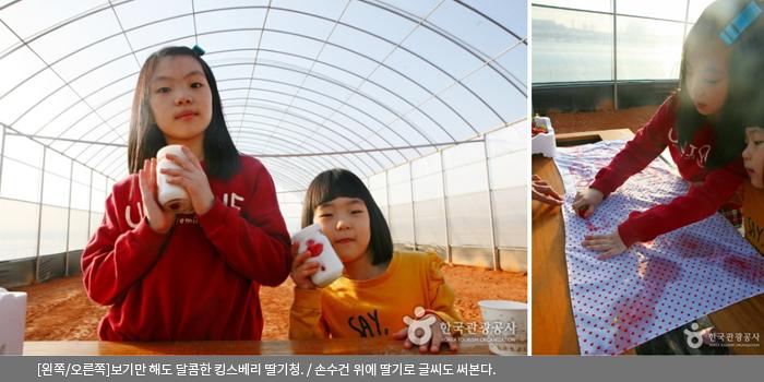 [왼쪽/오른쪽]보기만 해도 달콤한 킹스베리 딸기청 / 손수건 위에 딸기로 글씨도 써본다.