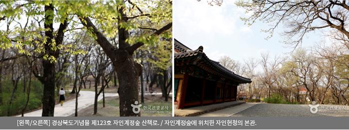 [왼쪽/오른쪽]경상북도기념물 제123호 자인계정숲 산책로 / 자인계정숲에 위치한 자인현청의 본관