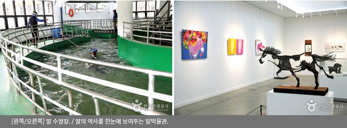 [왼쪽/오른쪽]말 수영장 / 말의 역사를 한눈에 보여주는 말박물관