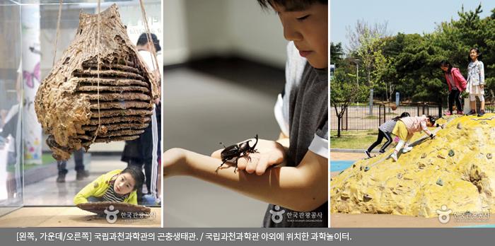 [왼쪽,가운데/오른쪽] 국립과천과학관의 곤충생태관 / 국립과천과학관 야외에 위치한 과학놀이터