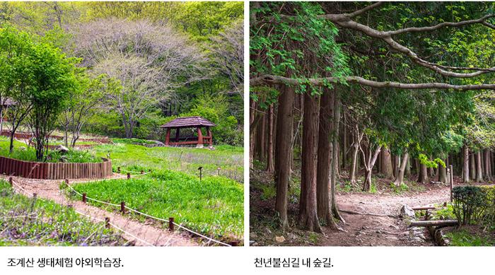 조계산 생태체험 야외학습장, 천년불심길 내 숲길