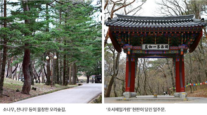 소나무, 전나무 등이 울창한 오리숲길, '호서제일가람' 현판이 달린 일주문