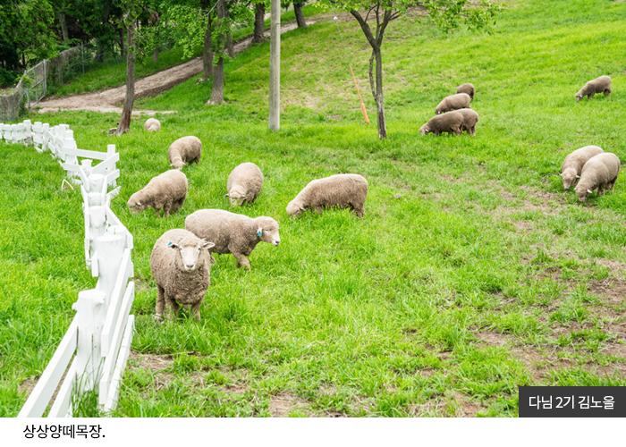 다님2기 김노을 - 상상양떼목장