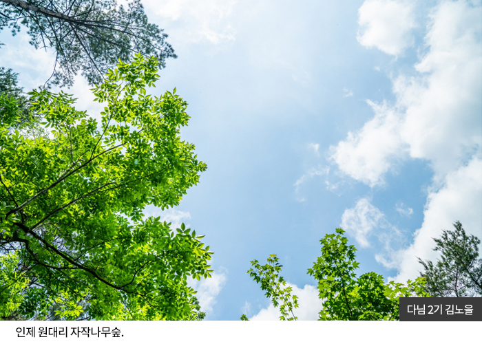 다님2기 김노을 - 인제 원대리 자작나무숲