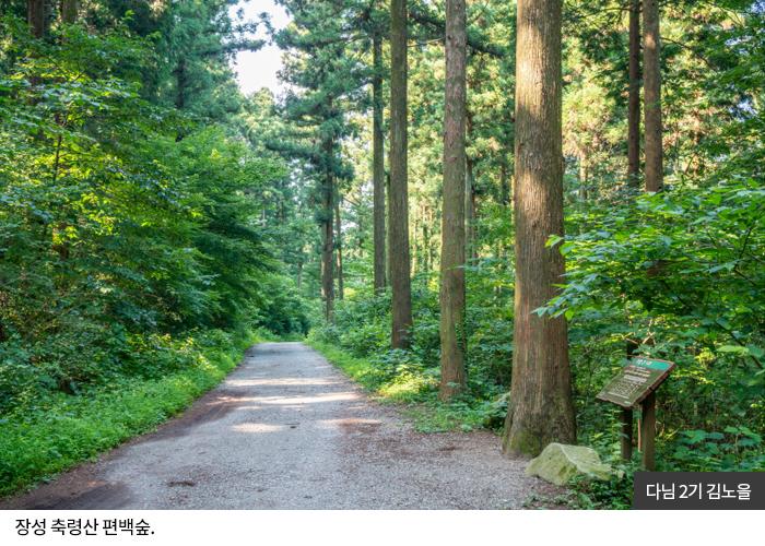 다님2기 김노을 - 장성 축령산 편백숲