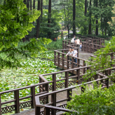 장태산자연휴양림 산책로 이미지