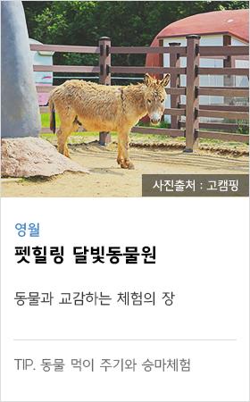 영월 펫힐링 달빛동물원 동물과 교감하는 체험의 장 tip. 동물 먹이 주기와 승마체험