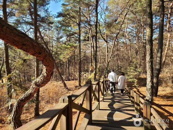 건강장수체험관 건물 뒤편 편백나무숲에 조성된 데크길 산책로 - 한국관광공사