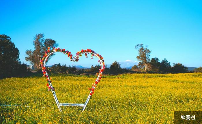 멋진 추억을 담을 수 있는 유채밭 포토존 - 백종선