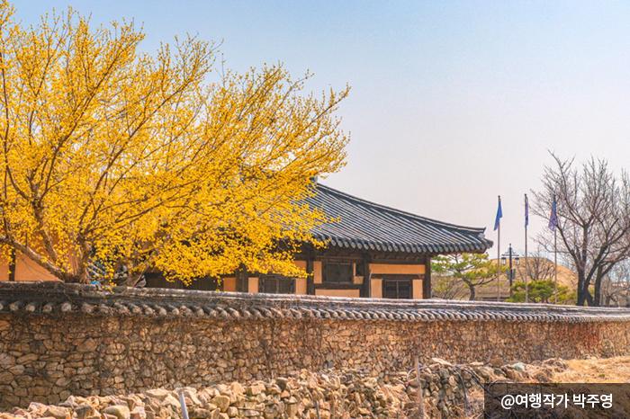 봄을 맞이하여 노란 꽃망울이 터졌다 - 여행작가 박주영