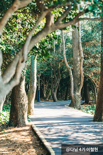오동도 생태숲 - 다님 4기 이철현