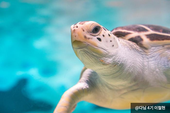 바다거북 - 다님 4기 이철현