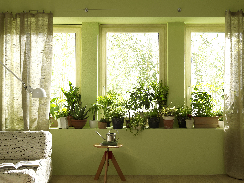 공기정화식물이 있는 거실 풍경.