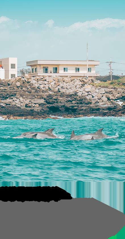 야생 돌고래 탐사 - 누적 관측 확률 90%이상! #동일리포구 #남방큰돌고래 #보트투어
