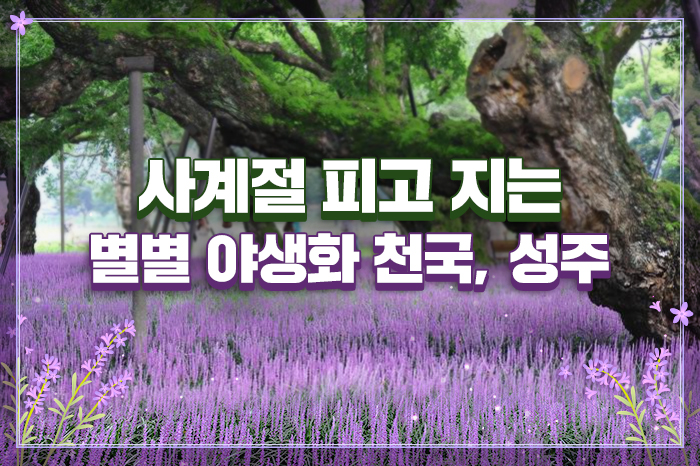 사계절 피고 지는 별별 야생화 천국, 성주