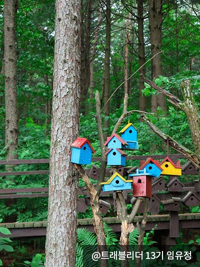 나무옆에 있는 새집 8개 - @트레블러 13기 임유정