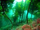 바다 사막화,<br>바다 숲으로 막는다!
