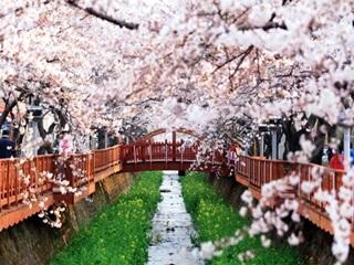 우리 같이 벚꽃길 걸으실래요?