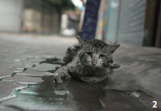 """""""길고양이 눈빛에서 보이는 공포·아픔, 저만 불편한가요?"""""""
